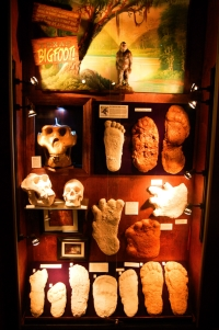 Big foot plasters