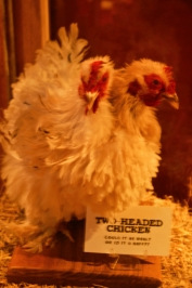 Two-headed chickens