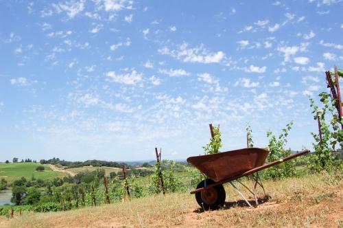Wheelbarrow and winery