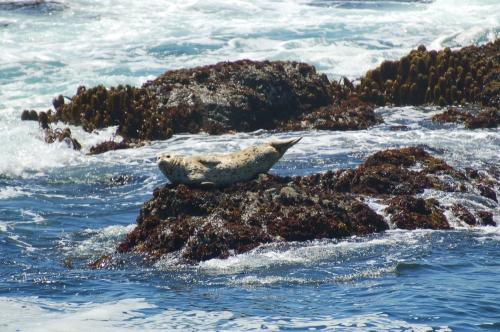 Half-moon seal