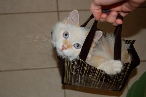 Hobbes in a bag