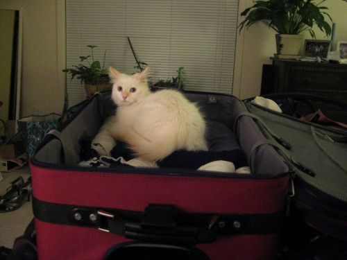 Hobbes in our suitcase