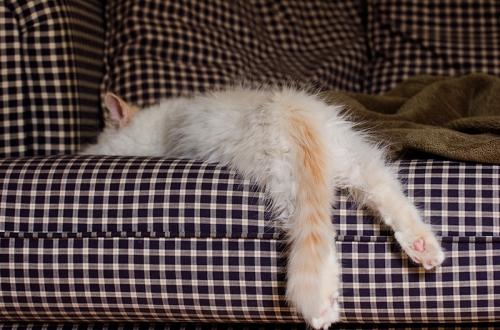 Kitten draping