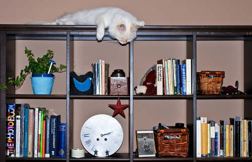 On top of the bookshelf