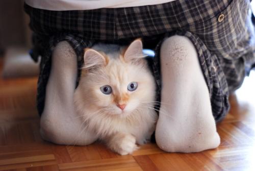 Hobbes underfoot