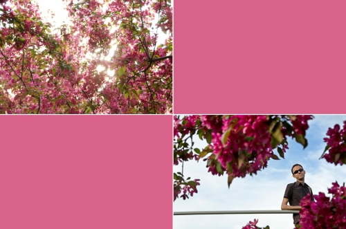 Cherry blossoms collage