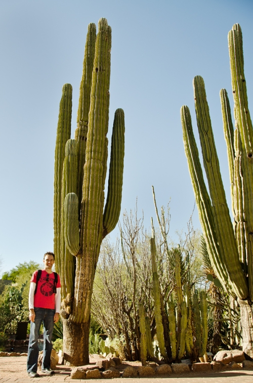 Steve and saguaro cacti